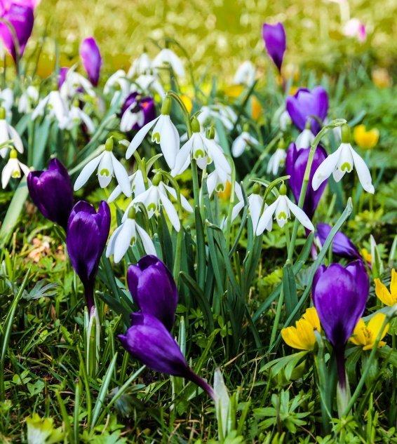 Przyszła do nas Pani Wiosna