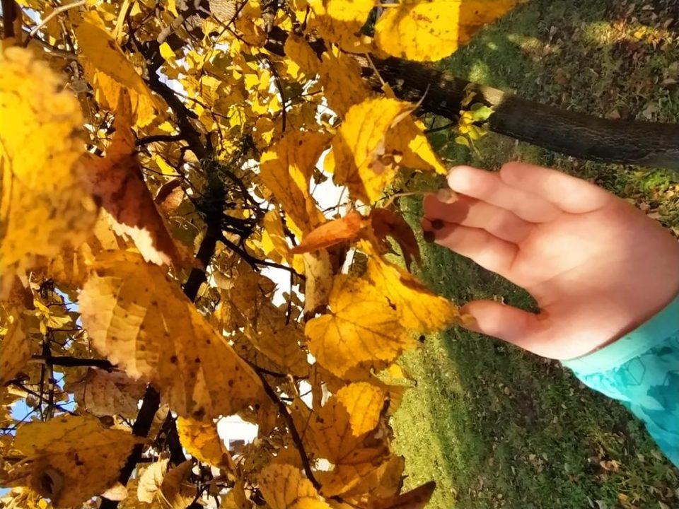 Obserwacja przyrody jesienią